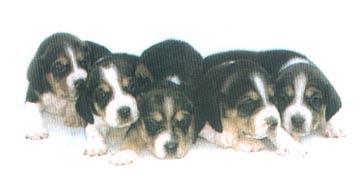 Prima cucciolata di Casa Calbucci